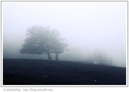 arbre_brouillard_1_