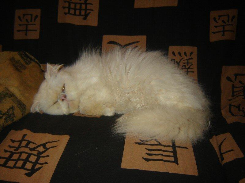 Cléo dort
