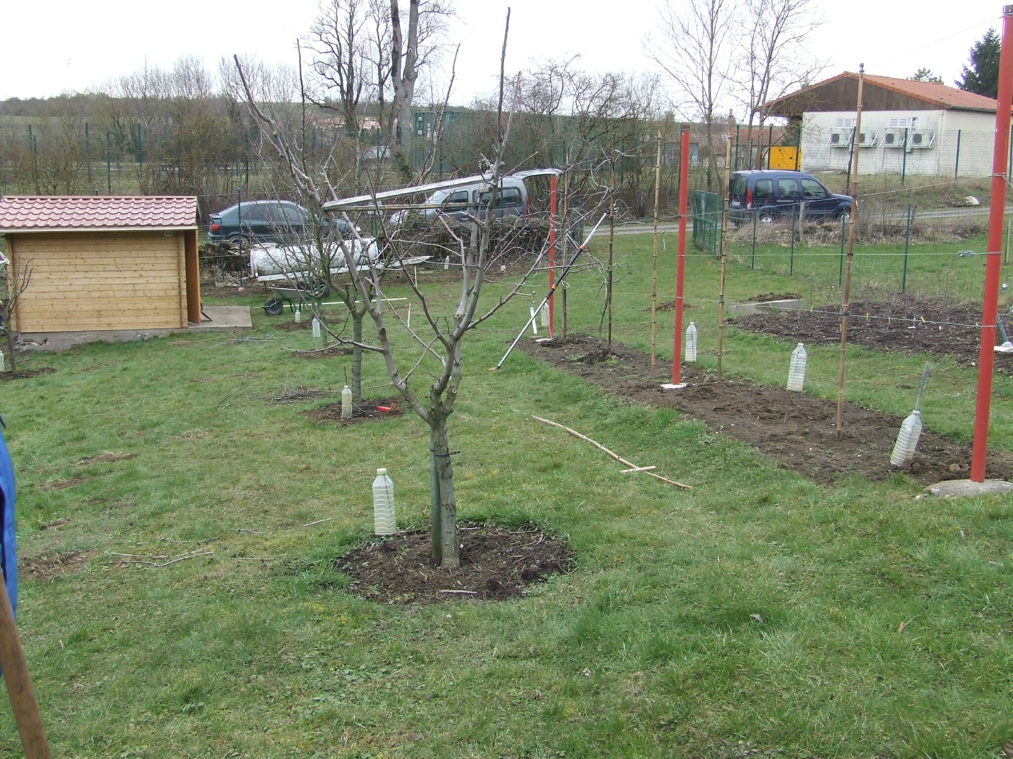 Formation taille arbres fruitiers 2013 les amis des - Taille des arbres fruitiers ...