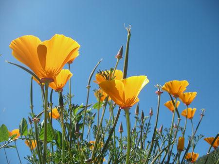 fleursjaunes2