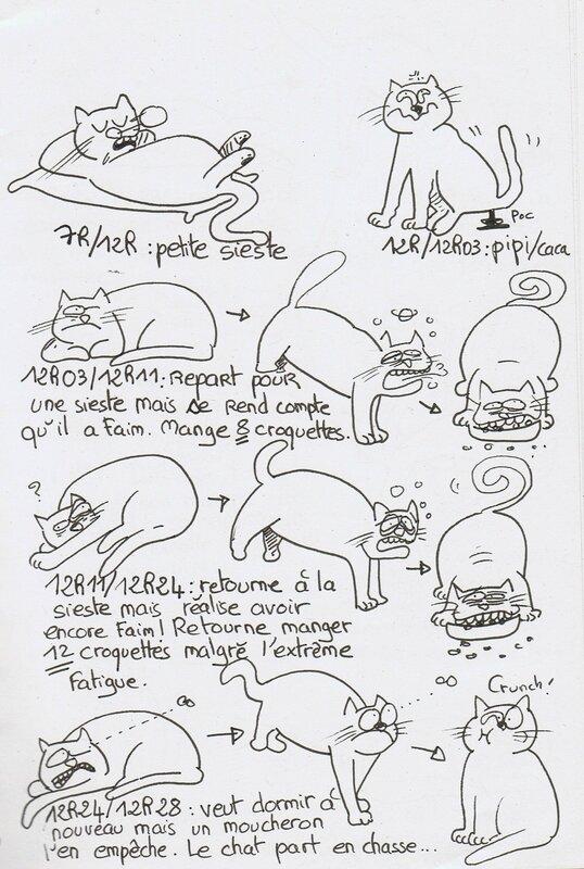 étude du chat