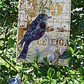 Un petit oiseau sur sa branche
