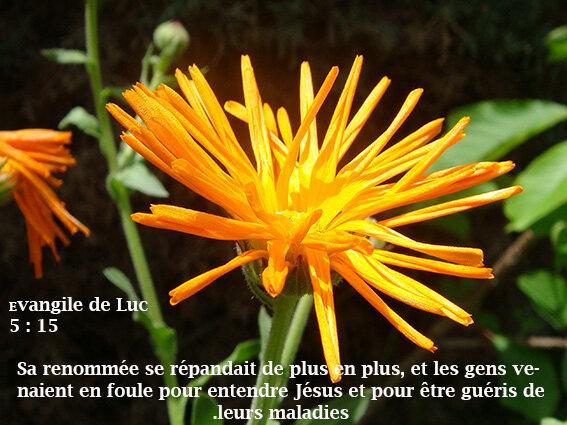 verset_biblique_J_sus_gu_rit_2