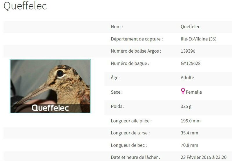 Description de Queffelec