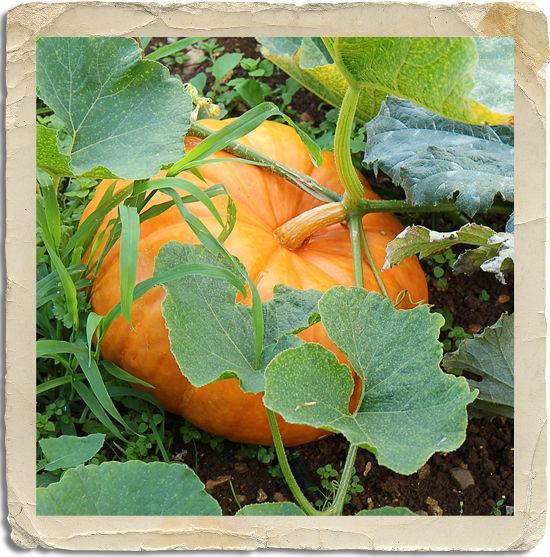 jardinblog
