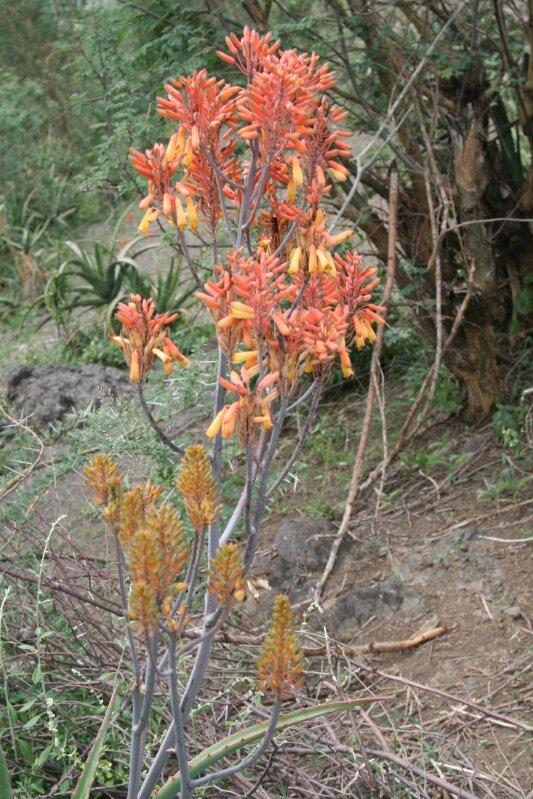 photos ethiopiedjibouti 170