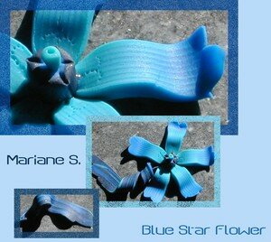 Blue_Star_Flower