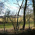 A5 - Falkwiller vu à travers les frondaisons
