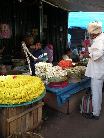 Mysore___Calicut___arriv_e_Cochin_293