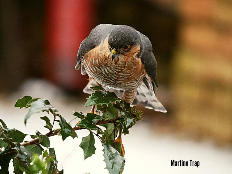 aviary-image-1518384297343