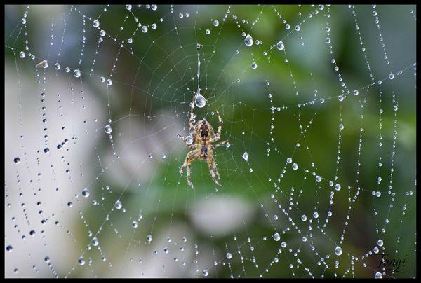 araigné min