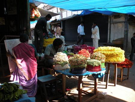 Mysore___Calicut___arriv_e_Cochin_290