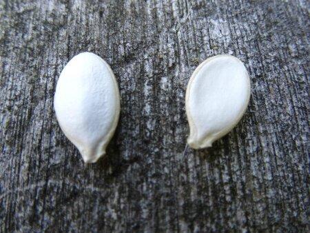 Deux graines