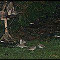 Les petits oiseaux de mon jardin ...