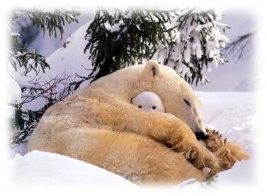 hibernation_ourse_et_ourson