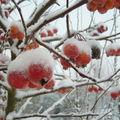 Il neige à l'atelier nomade