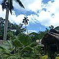 Cuba - la sierra de banao et ses colibris