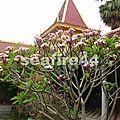 042_P Penh_pagode d'argent_jardin