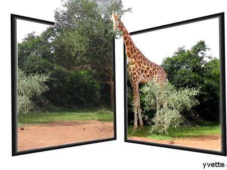 girafe sortant d'un cadre