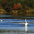 Lac Cygnes 2610154