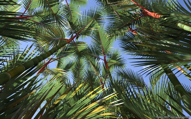 04 Cyrtostachys renda lakka lipstick palm plant tree 3d model TPF The Factory 3ds c4d max obj vue present 3