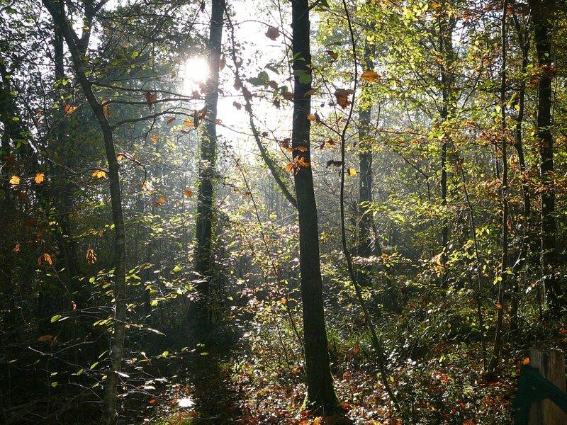 La nature en automne