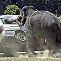 حيوانات غاضبة من بني البشر