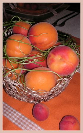 2009_07_07_table_abricots5
