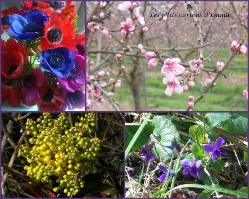 Fleurs de printemps 2016 b'