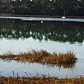Lac Hossegor 12121513