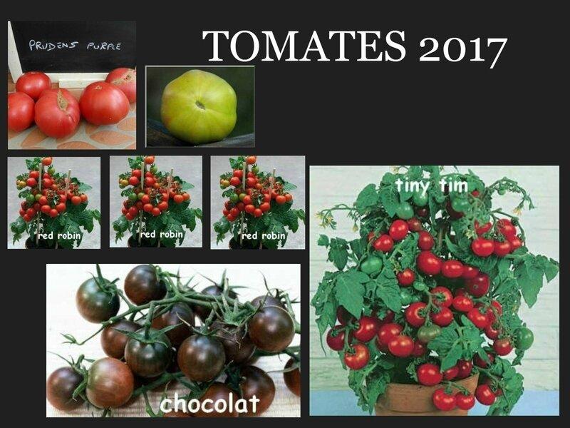 tomates 2017 - 3