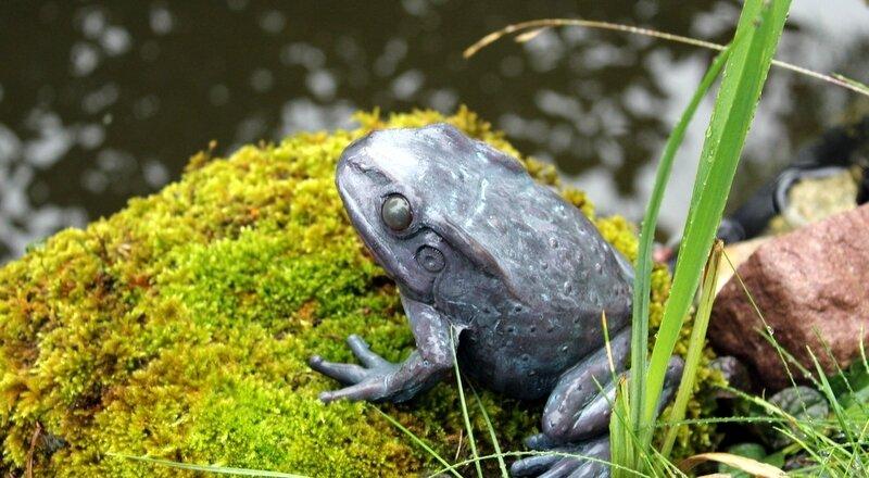 ce matin, c'est la fête à la grenouille !