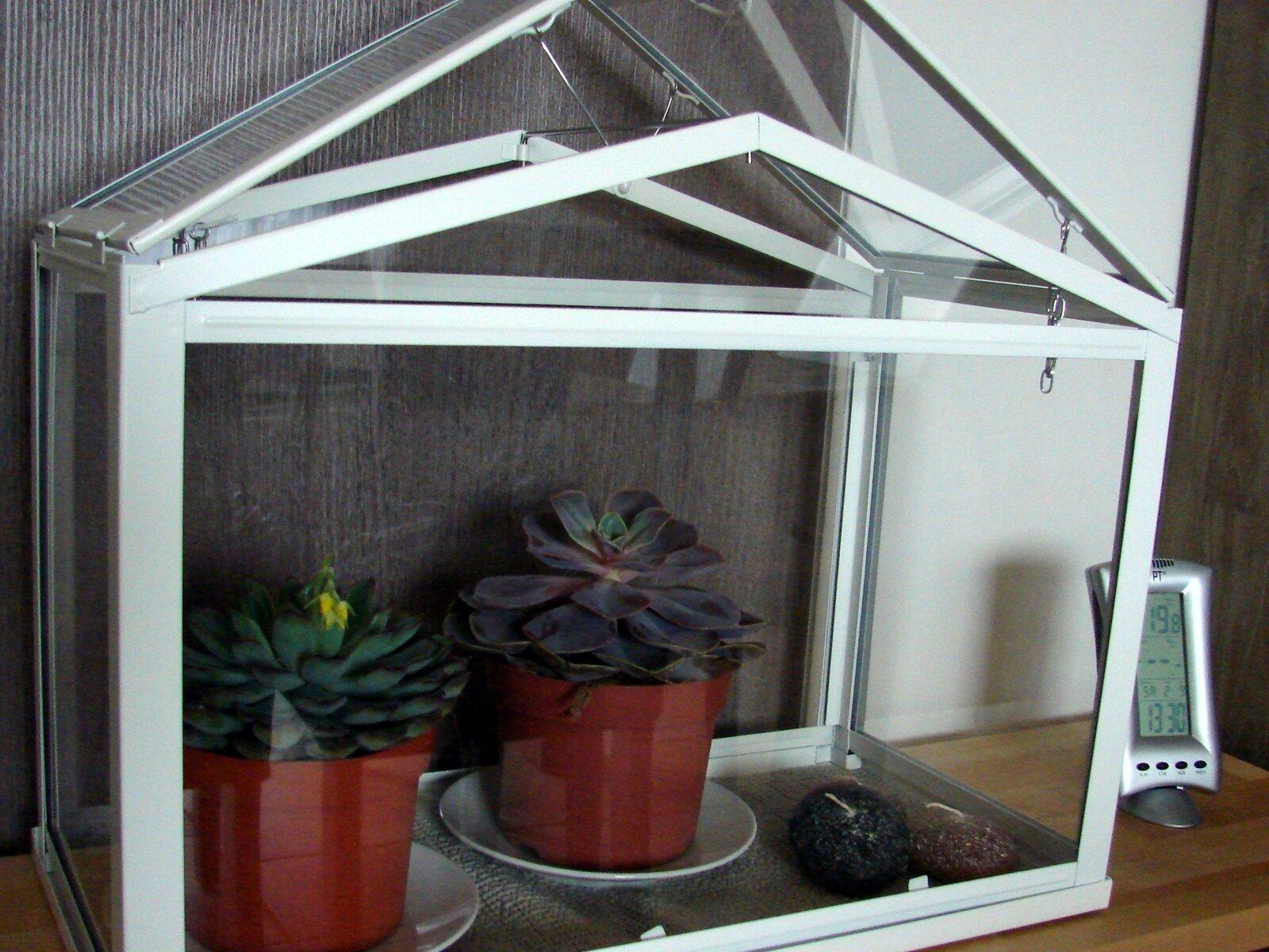 jardinage d 39 int rieur le blog de mimiblue. Black Bedroom Furniture Sets. Home Design Ideas