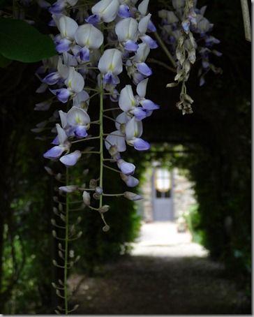 Le jardin de Froufrou…