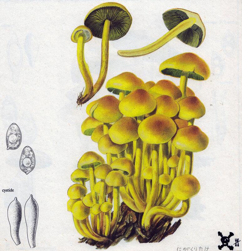 Hypholoma fasciculare Grund 141