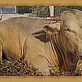 Miel vert (4/7) - j'aime le printemps - poème : super un chien - recette : foie de veau à la créole