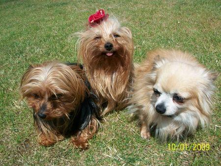 les dernieres photos de la petite famille2011 017