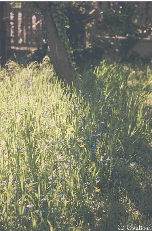 fleurs_jardin-10