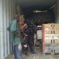 Déchargement container 2 (5)