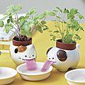 Noted : des kits de plantes aromatiques pas comme les autres !