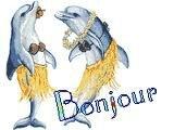 bonjour dauphin