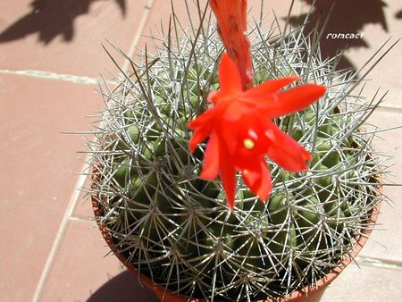 cactus_195