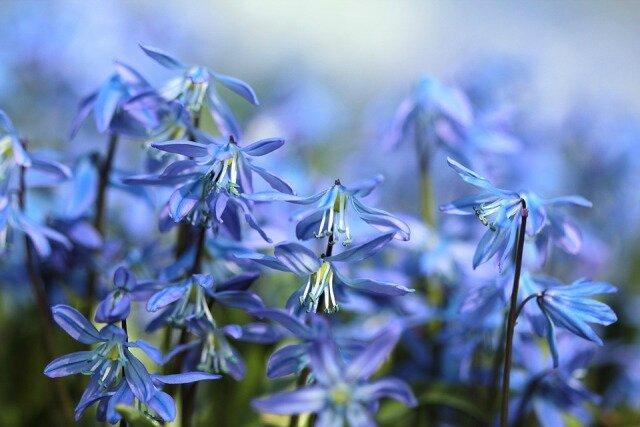 Selacia – Conseils pour Gérer les Énergies d'Avril ( Publié lpar translightml)