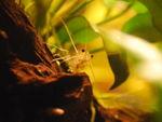 aquarium_065