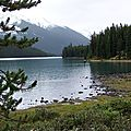 Canada : les caribous des bois menacés par loups et skieurs