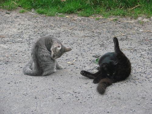 2008 09 11 Les deux chatons qui font leurs toilettes