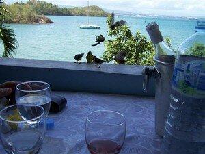 Martinique_177__Medium_