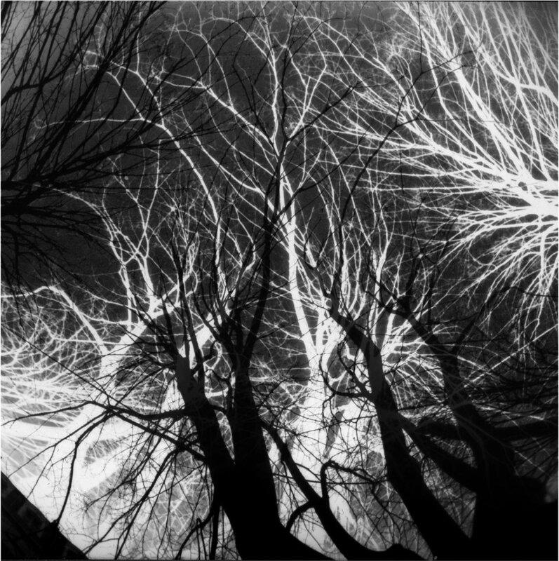 arbres palimpseste