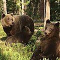 Câlin d'ours avec nicole, 29e inscrite