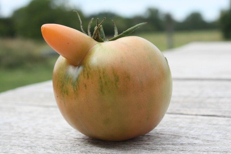 Les légumes ont du nez...tomate Cyrano?